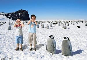 企鹅-19